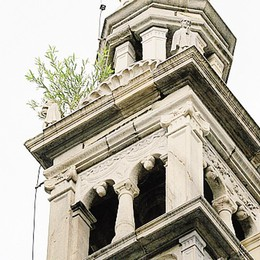Una pianta in cima al Duomo  Due giorni per la pulizia