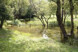 Un grosso rettile sul lago di crezzo serpente nero for Grosso pesce di lago