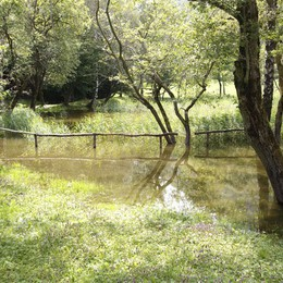 Un grosso rettile sul lago di Crezzo  Serpente nero terrorizza i gitanti