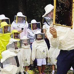 Festa delle api e del miele  Sabato e domenica a Erba