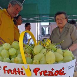 S. Fedele, la festa dell'uva   A tavola con menù a tema