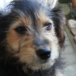 Killer dei cani, i proprietari detective  «Quel veleno rischioso pure per i bimbi»