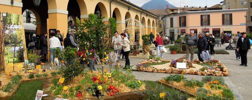 L'Expo erbese comincia in piazza  «Eventi ogni domenica. Senz'auto»