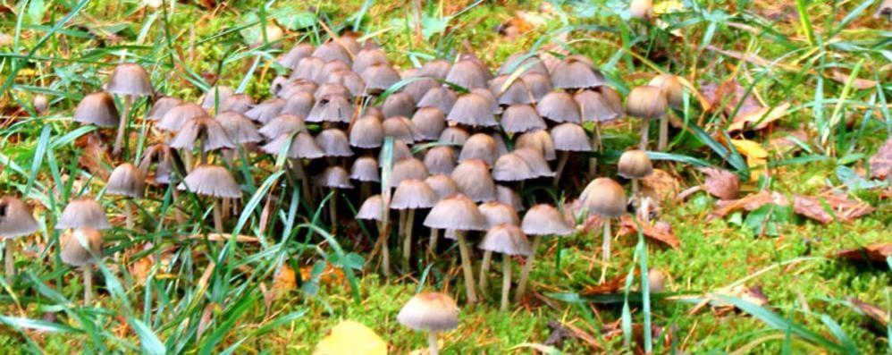 Frontalieri dei funghi   Lite in Svizzera per la legge