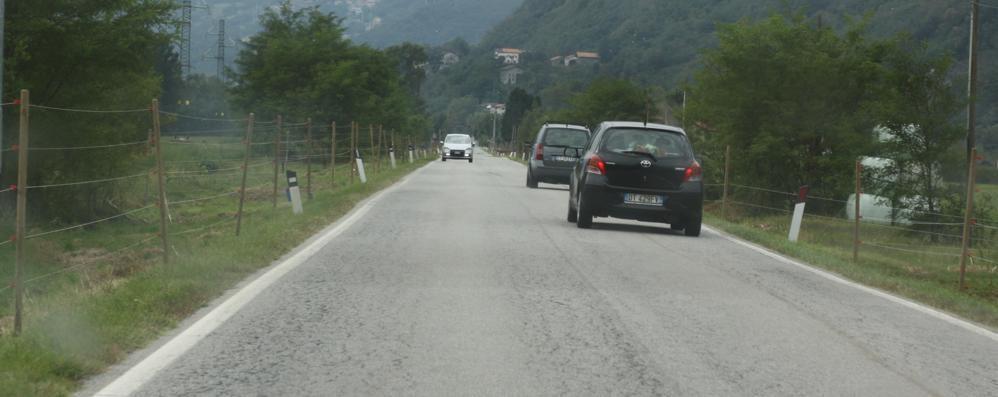 Cervo sulla strada  Motociclista ferito a Grandola