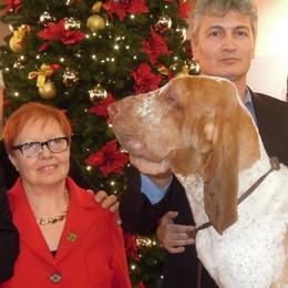 Aramis è il migliore a Erba  Batte duemila cani in fiera