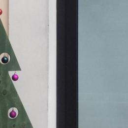 Appiano, alberi di Natale in regalo   Ma i vandali li danneggiano subito