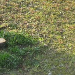 Rubano cipresso al cimitero  «Per fare l'albero di Natale»