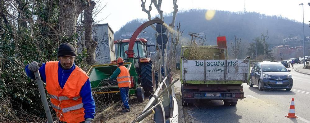 «Ma che follia tagliare quei platani»  Gli esperti del verde contro le potature