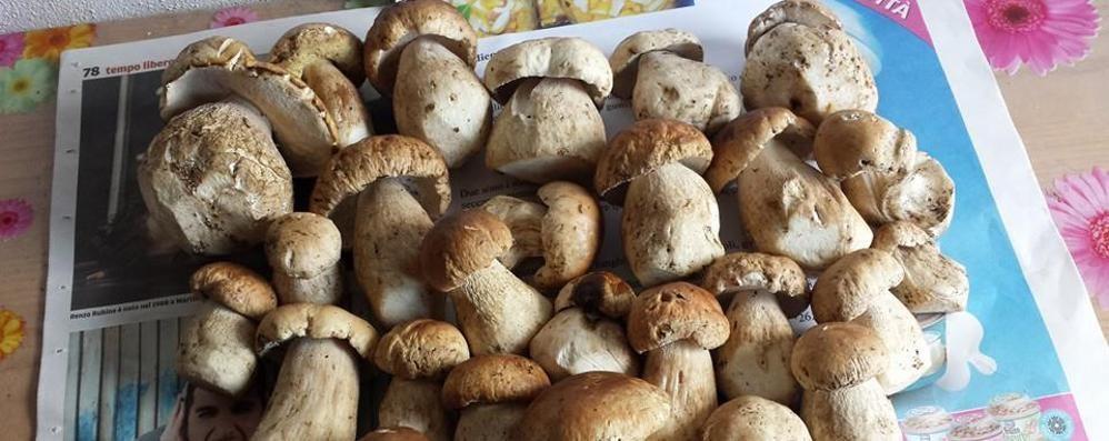Il Ticino blocca anche i funghi  Per gli italiani tesserino a peso d'oro