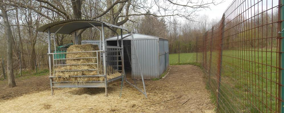 Solbiate, rubano pecore e capre  Pranzo pasquale assicurato