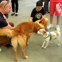 Mariano, cani in passerella  Sfilata per aiutare i randagi