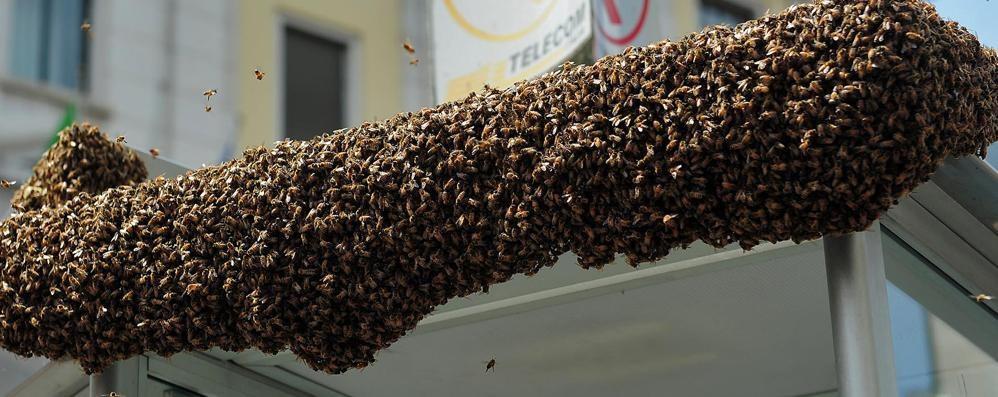 Diecimila api in piazza  Ci pensano i pompieri