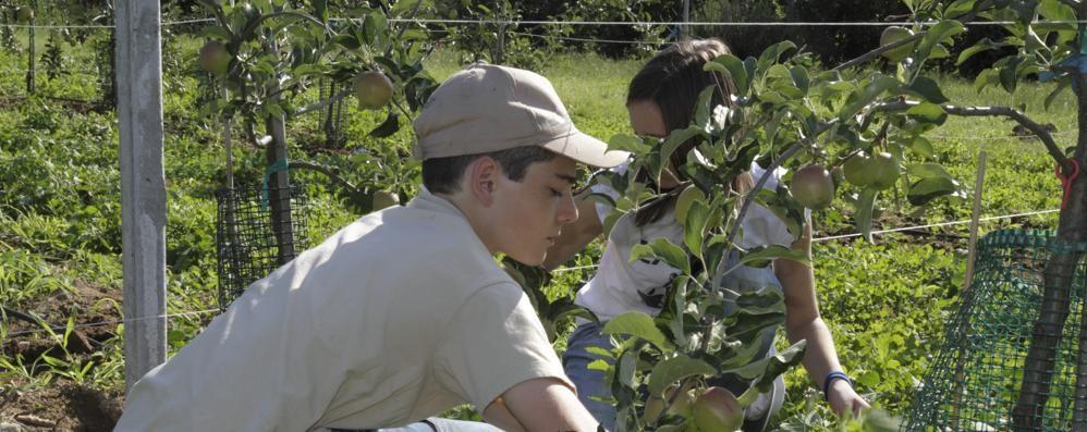Minoprio: «Così salviamo 80 qualità di mele»
