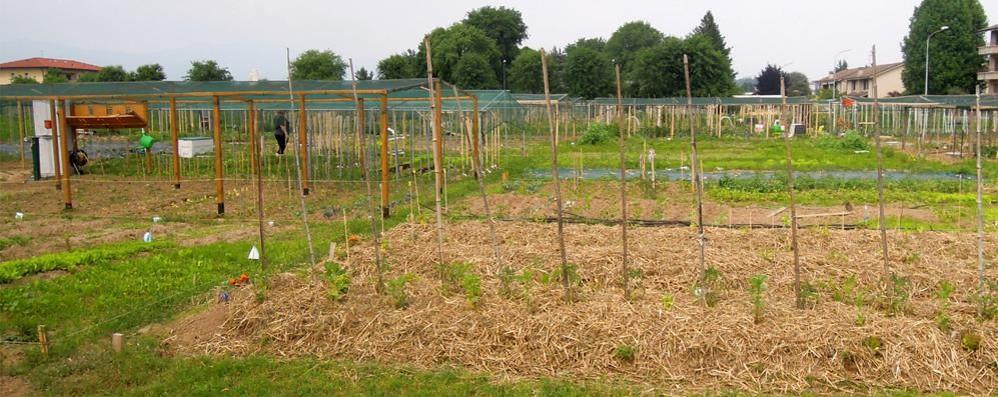 A Cantù cresce la fame di orti pubblici  Ce ne sono 132. E ne servono altri 30