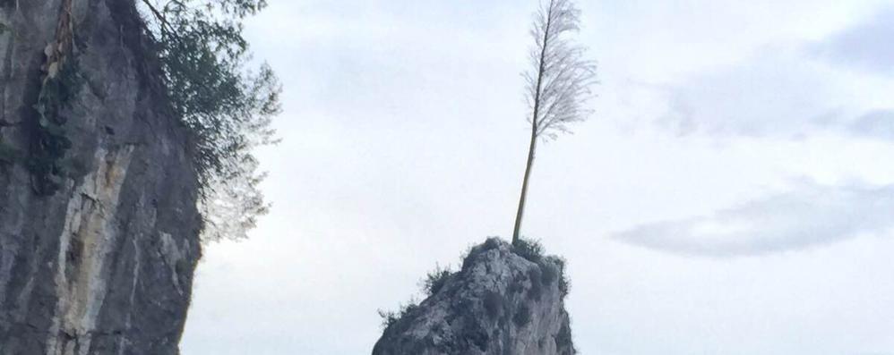Bellagio, muore il pino-simbolo  Lo sostituisce la Spina verde