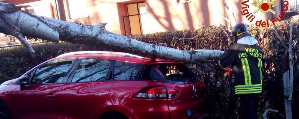 Lora, crolla una pianta  e finisce su un'auto in sosta