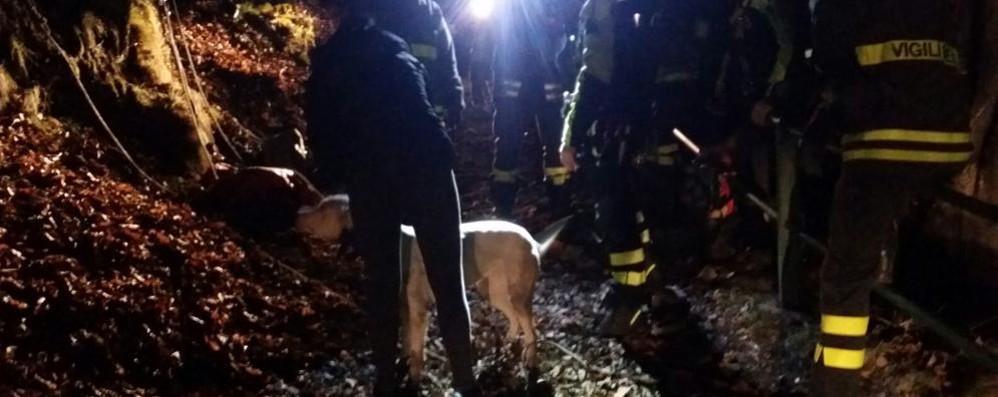 Il cane scivola in una gola  Recuperato da trenta metri