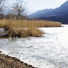Cerva azzannata e inseguita dai cani  Fugge nel lago di Piano. Ma non ce la fa