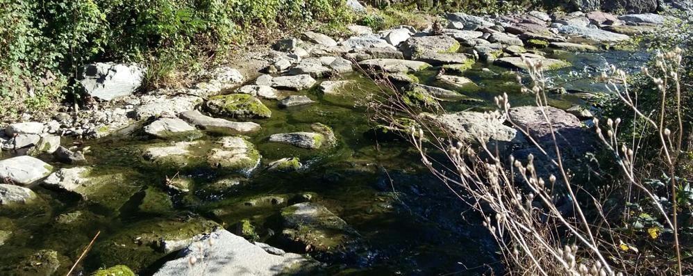 Strage di alborelle nel Molgora  «Sostanza inquinante in acqua»