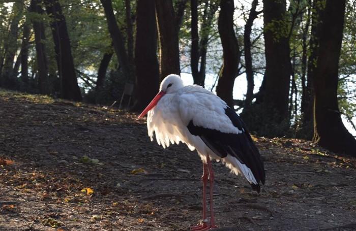 Una cicogna sull'Isola dei cipressi