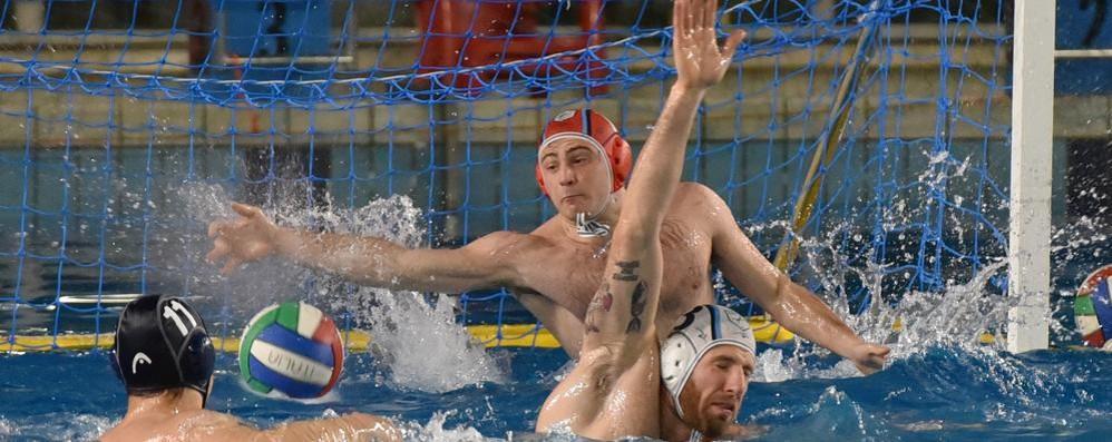 Pallanuoto Como e Como Nuoto Un girone con tanti derby
