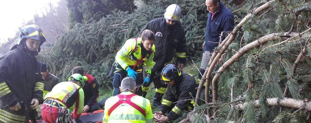 Travolta dall'albero tagliato dal marito  Paura per donna soccorsa con l'elicottero
