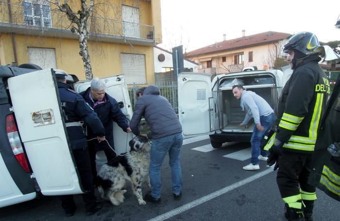 Il soccorso ai cani che erano sul furgone
