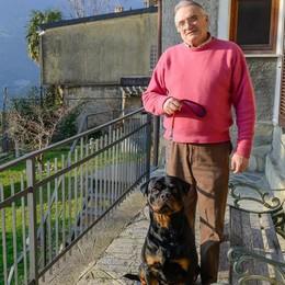 Salvò il bimbo dal rottweiler  Premiato a Blevio
