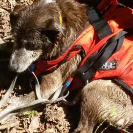 Cane nel dirupo, salvato dai pompieri