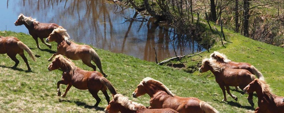 Da Lanzo al Generoso  Marcia con i cavalli del Bisbino