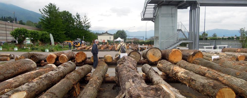 Duecento tronchi  e un settore che cresce