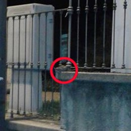 Cantù, topo avvistato al parco Argenti  E sul web è subito protagonista