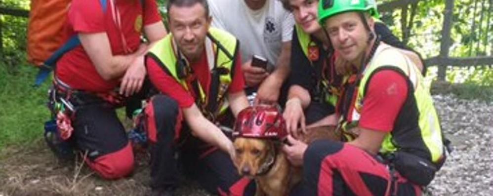 Cane precipita nel fosso  Salvato dai volontari