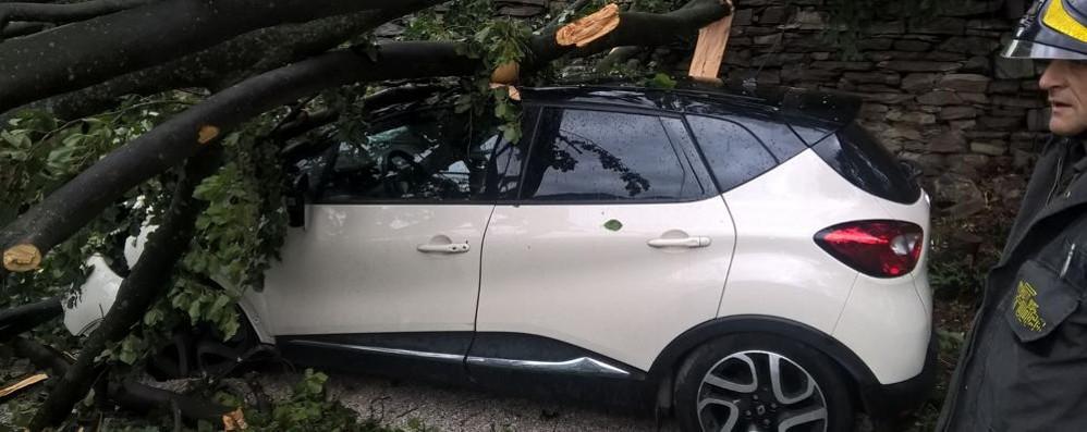 Maltempo in provincia Albero cade su auto a Cernobbio