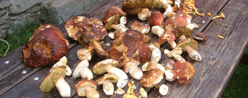 Troppa pioggia, i funghi non ci sono  «È la peggior stagione degli ultimi anni»