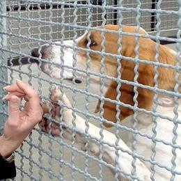 """Da migliore amico a """"inutile peso""""  Aumentano i cani abbandonati"""