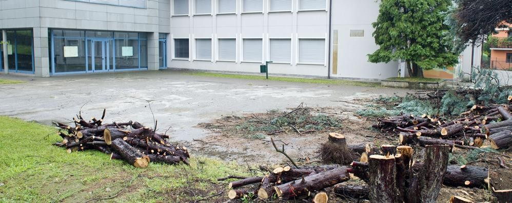 Casnate, via gli alberi davanti alle scuole  Il sindaco rassicura: «Ne metterò altri»