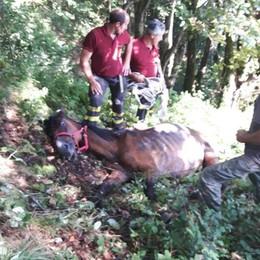 Cavallo nel dirupo Salvato a Pianello