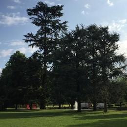 Tremila alberi e 2 milioni di siepi  Mariano diventa sempre più verde