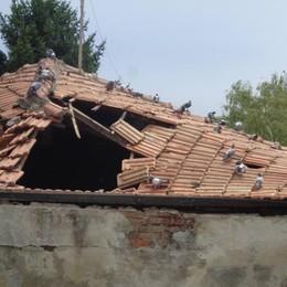 Marianesi esasperati  Topi e sporcizia in via Sant'Agostino