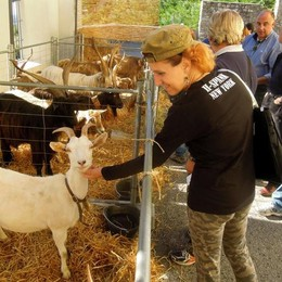 Caslino, capre e caprini superstar  Il giorno della fiera più attesa