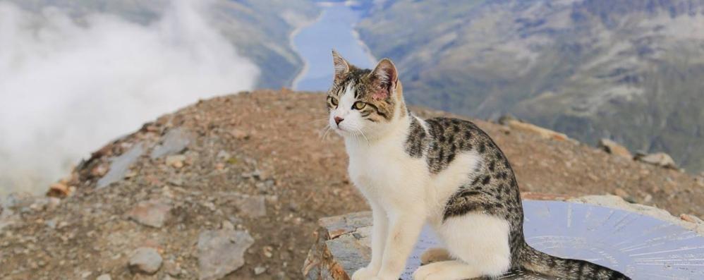 Il gatto Orione e la conquista del pizzo Stella