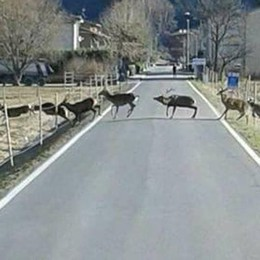 Pian di Spagna, indennizzi  per i danni da selvatici