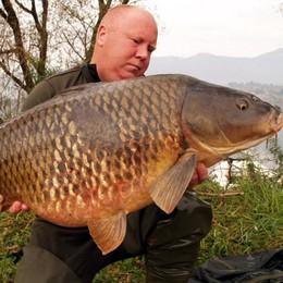 Pusiano, tremila permessi  per pescare le carpe