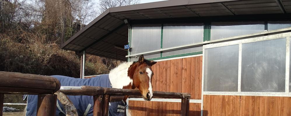Barni, capanno diventa casa abusiva  «Volevo curare il cavallo malato»