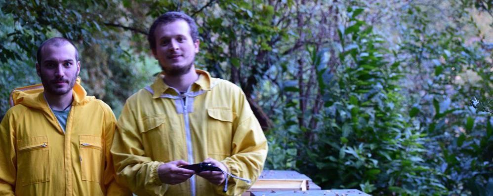 C'è un'arnia da adottare  per salvare le api a Faloppio