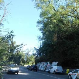 Allarme lungo le strade  Comune, gara d'appalto  per le piante pericolanti