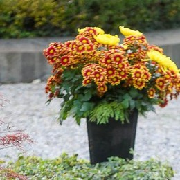 Cimiteri ripuliti per il giorno dei morti  E domani la festa delle Forze armate