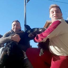 Albavilla, ladri a casa ma ci sono tre cani  «Senza di loro avremmo rischiato grosso»